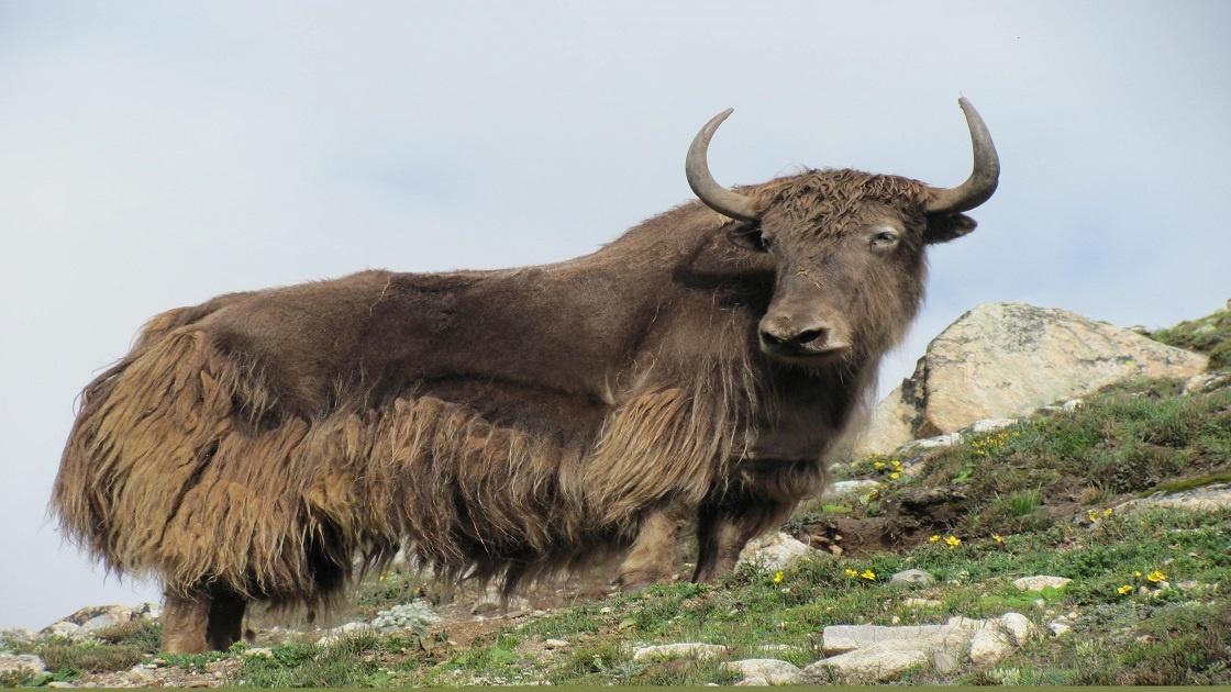 Annapurna Mountain Facts